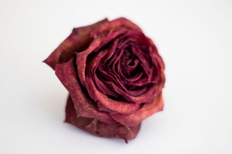 Glühweintrend Rosé Glühwein